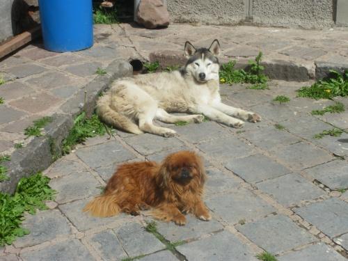 más perritos