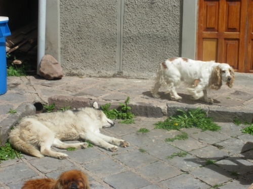 The door opens into a courtyard where these three silly dogs live.