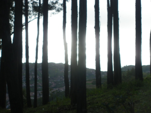 Next we made our way to one of Cusco´s many magical (and sadly man made) Eucalyptus forests.