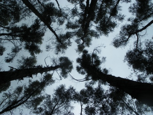 and stared at these treetops as they danced for us.